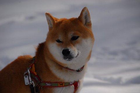 雪のおすまし.JPG