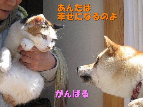 ピーとらんこ.jpg